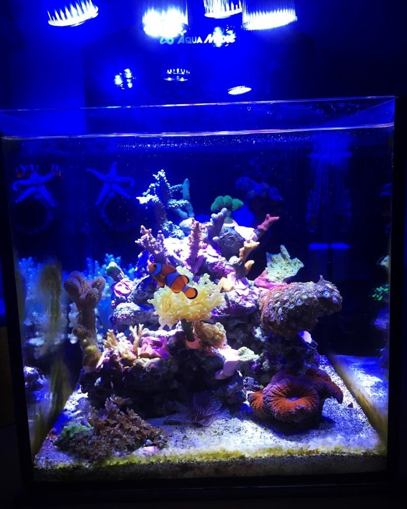 Mon nano yasha aquamedic  Image14