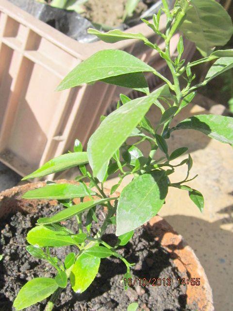 Selon vous Quelles plantes de chez vous , pourraient pousser chez moi ? Orange10