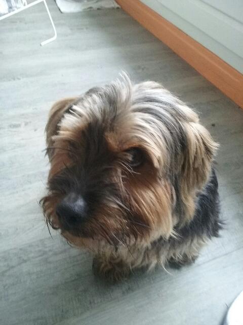 2 chiens trouvés errants non identifiés sur Mitry Mory (77) 20160127