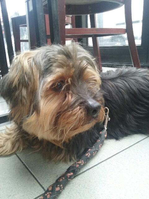 2 chiens trouvés errants non identifiés sur Mitry Mory (77) 20160130
