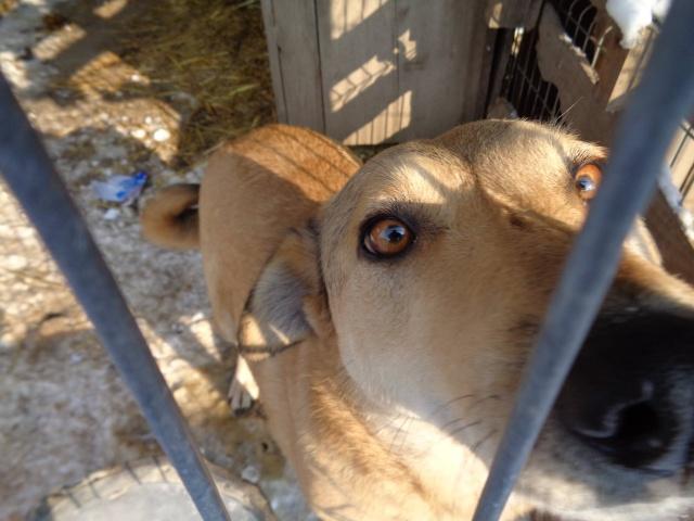 BAILEYS, née en 2011, sauvée de l'équarrissage - parrainée par Nathalie -SOS-R-SC - Page 2 Bailey10