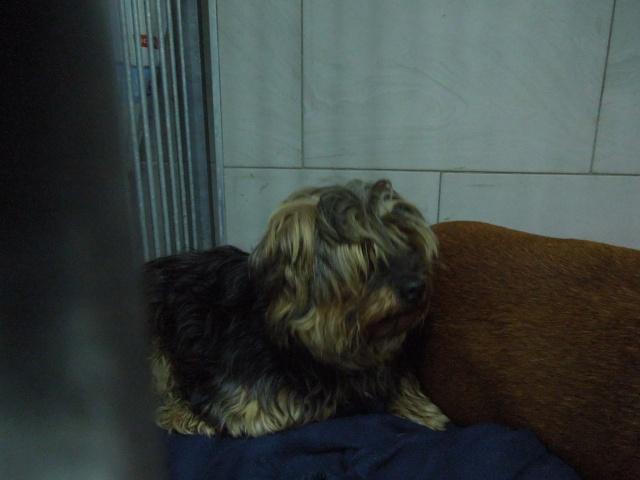2 chiens trouvés errants non identifiés sur Mitry Mory (77) Dscn7013