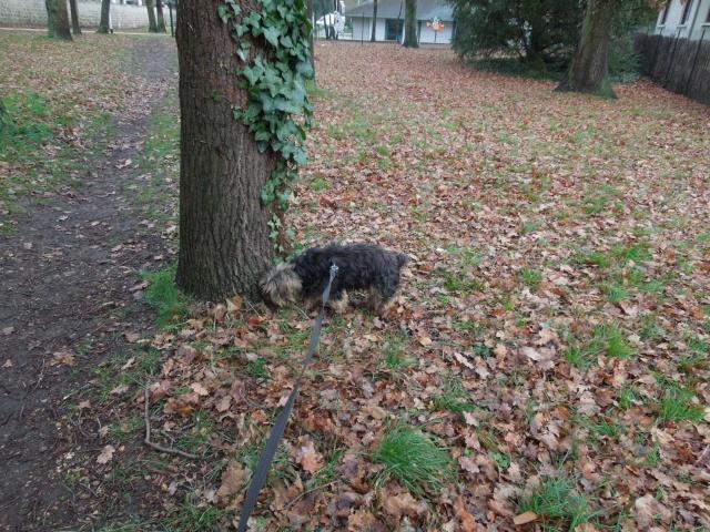 2 chiens trouvés errants non identifiés sur Mitry Mory (77) Dscn7024