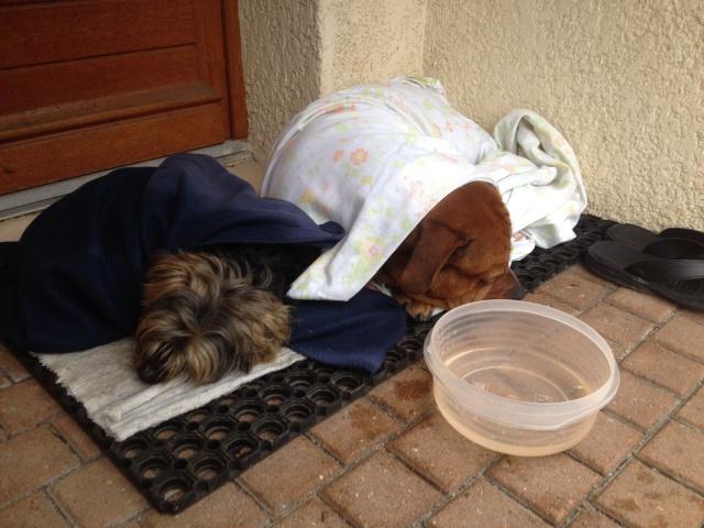 2 chiens trouvés errants non identifiés sur Mitry Mory (77) Img-2010