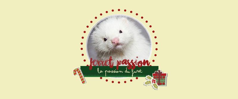 Ferret Passion - Forum consacré aux furets et aux passionnés. Noel10