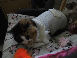 ma chatte ne mange presque plus!! Dsci0323