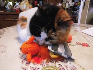 ma chatte ne mange presque plus!! Dsci0324