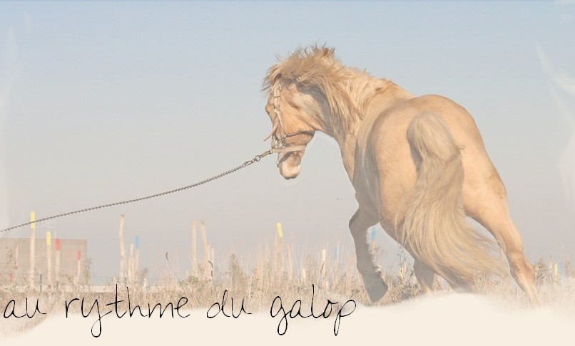Au Rythme Du Galop