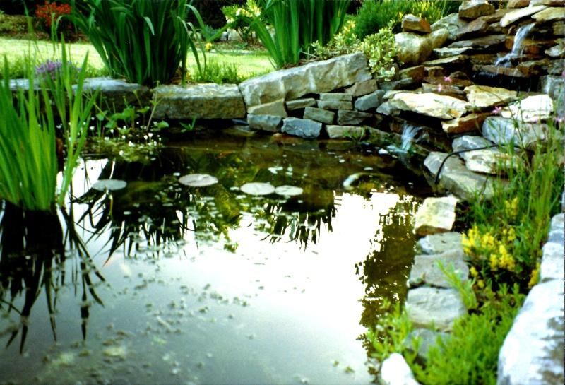 Un étang au jardin puis deux E_2010