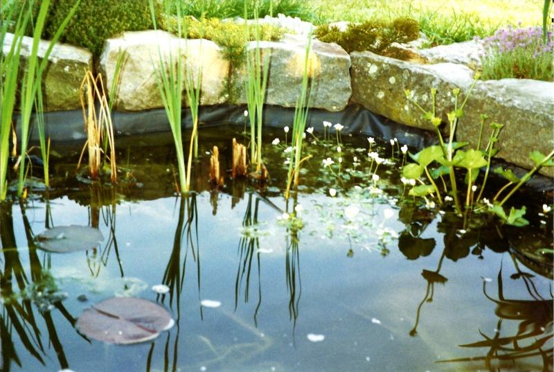 Un étang au jardin puis deux E_2210