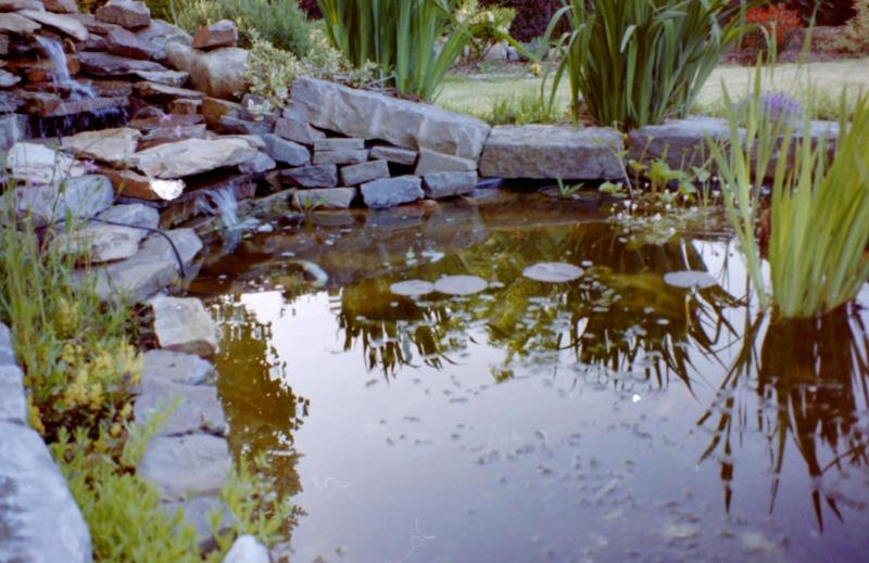 Un étang au jardin puis deux E_2510
