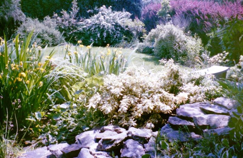 Un étang au jardin puis deux E_2910