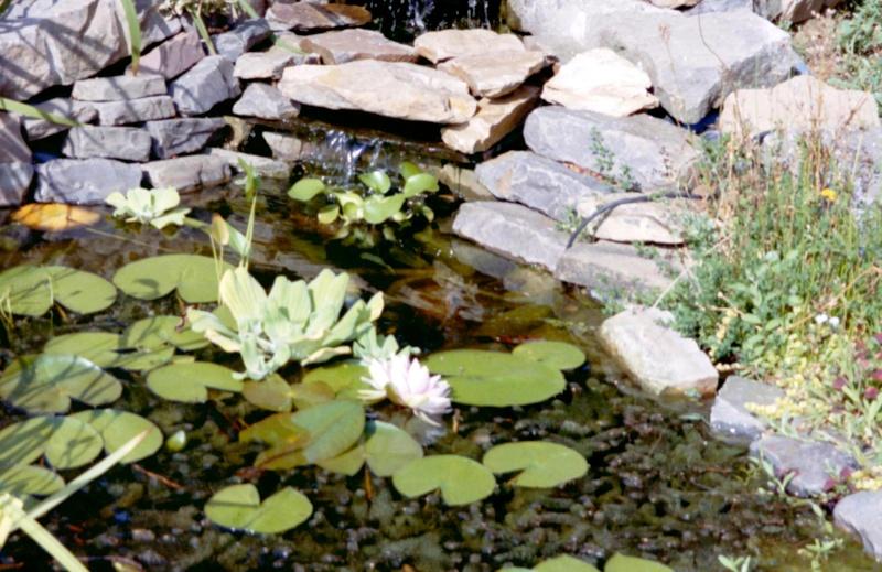 Un étang au jardin puis deux Ef_210