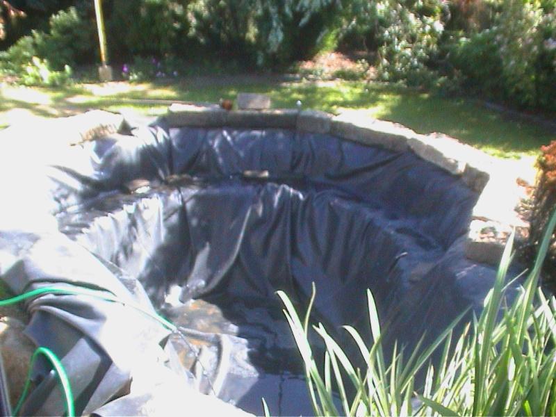 Un étang au jardin puis deux - Page 2 F3810