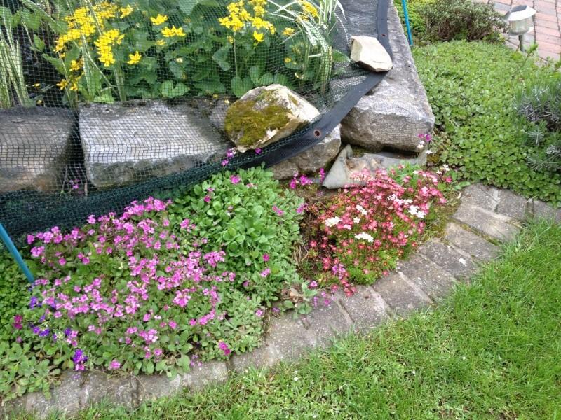 Un étang au jardin puis deux - Page 2 Img_0110