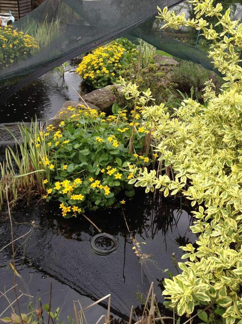 Un étang au jardin puis deux - Page 2 Img_0111