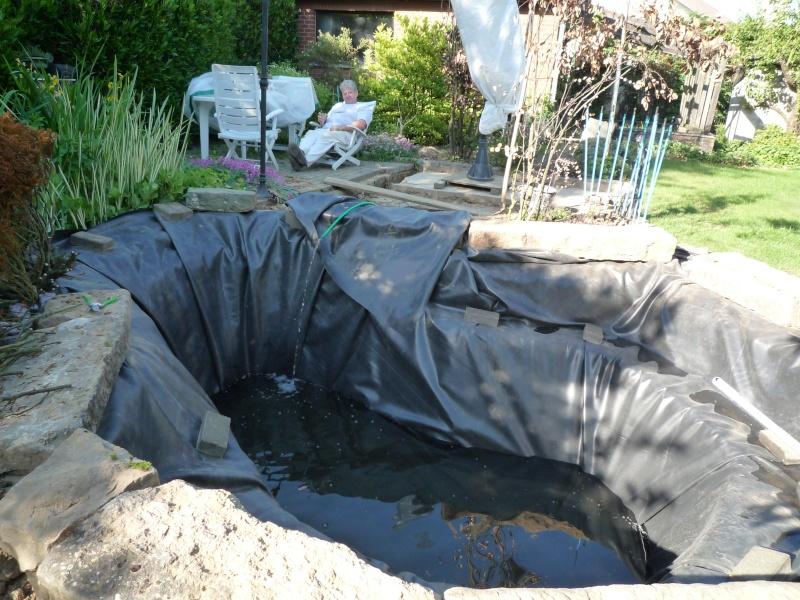 Un étang au jardin puis deux - Page 2 P1000114