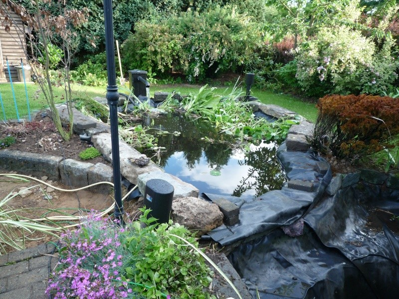 Un étang au jardin puis deux - Page 2 P1000115