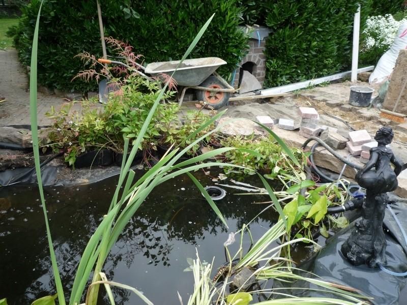 Un étang au jardin puis deux - Page 2 P1000210