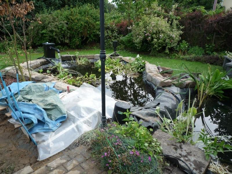 Un étang au jardin puis deux - Page 2 P1000211