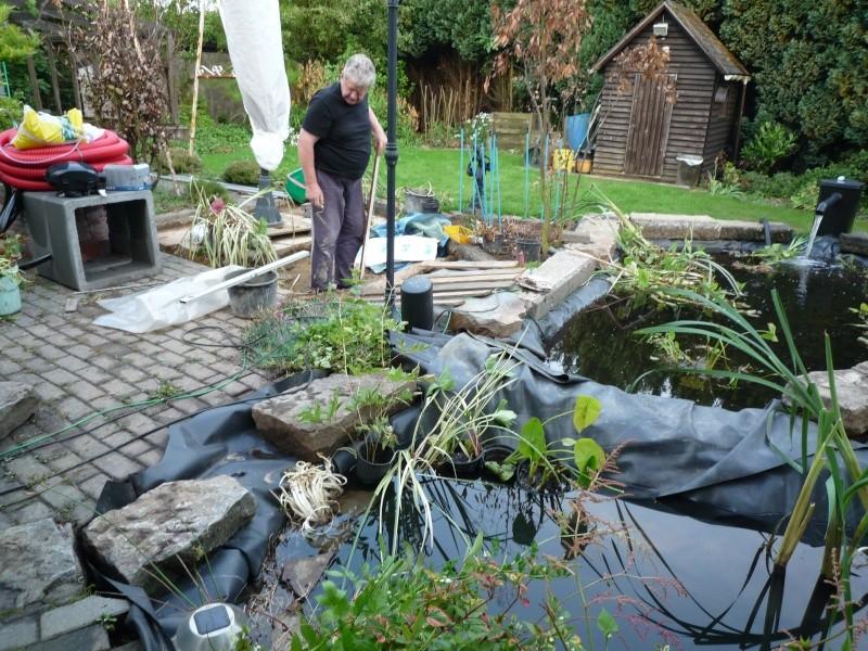 Un étang au jardin puis deux - Page 2 P1000213