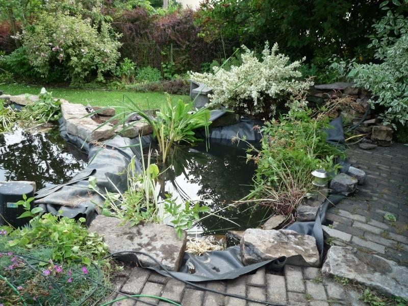 Un étang au jardin puis deux - Page 2 P1000215