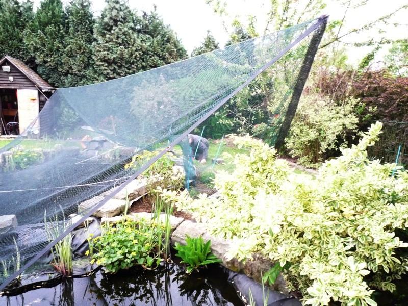 Un étang au jardin puis deux - Page 2 P1010010