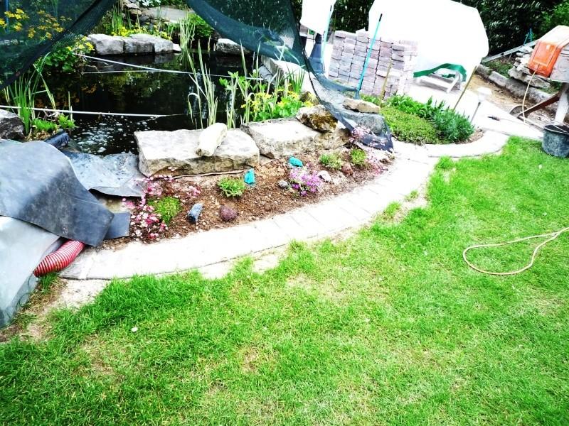 Un étang au jardin puis deux - Page 2 P1010012