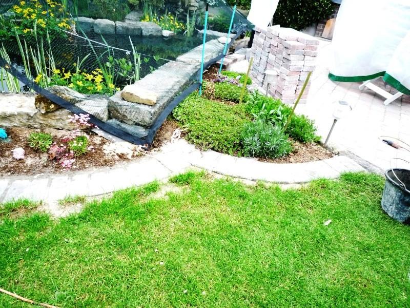 Un étang au jardin puis deux - Page 2 P1010013