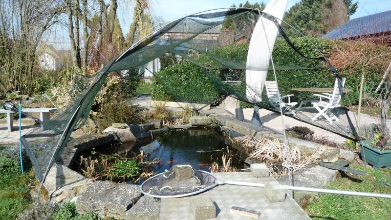Un étang au jardin puis deux - Page 2 P1020510