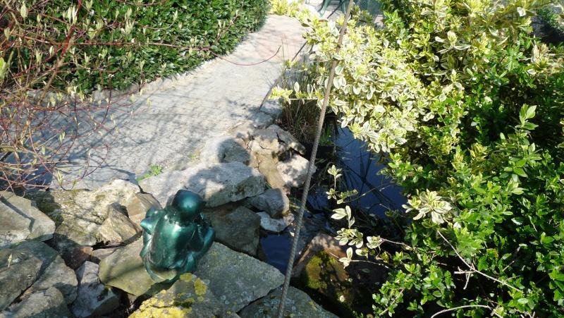 Un étang au jardin puis deux - Page 2 P1020610