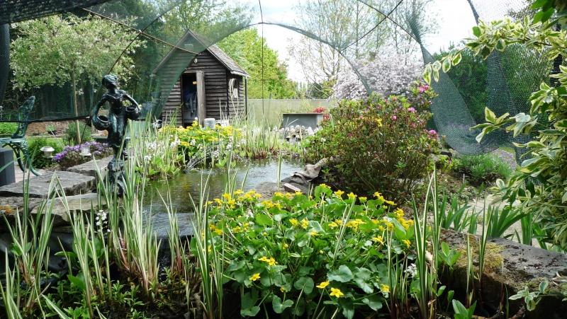Un étang au jardin puis deux - Page 2 P1020611