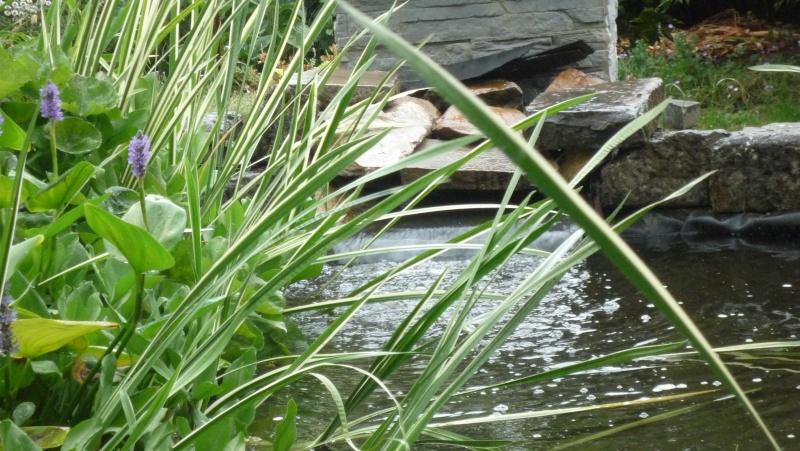 Un étang au jardin puis deux - Page 2 P1030912