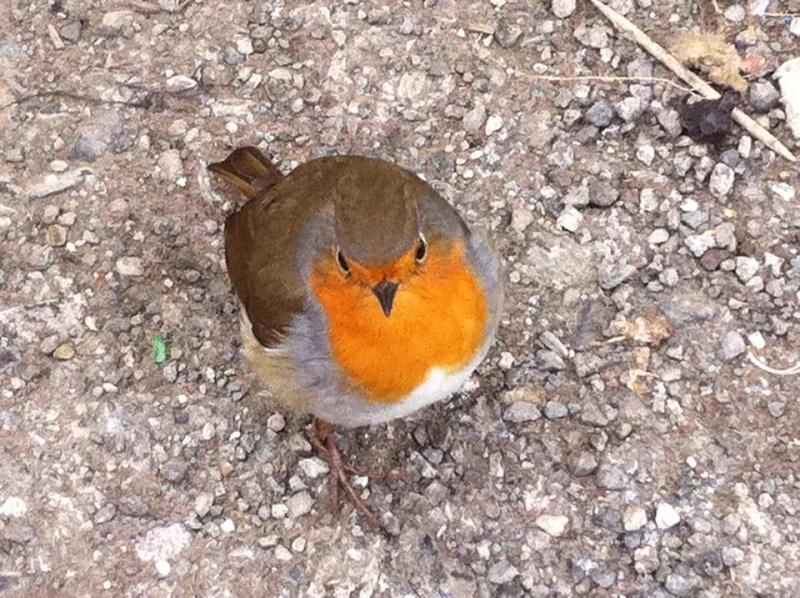 Les oiseaux de nos jardins - Page 2 12540910