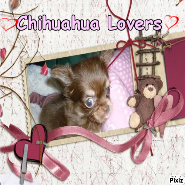 Chihuahua Lovers