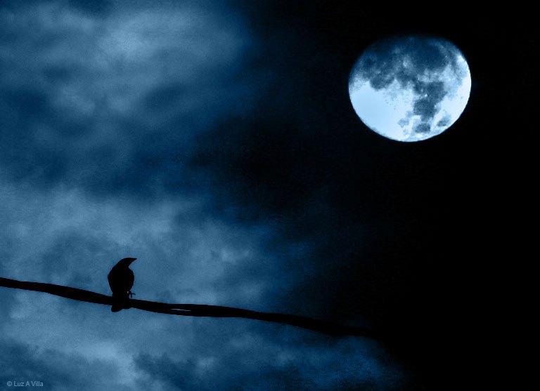 bonzour bonne zournée et bonne nuit notre ti nid za nous - Page 3 Pleine10
