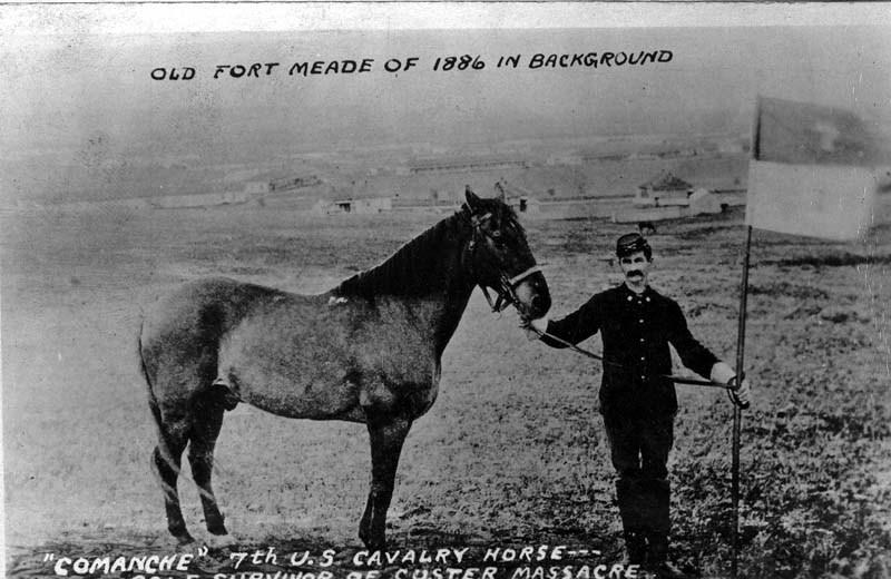 Curley, réputé pour être le seul survivant coté US de la bataille de Little Big Horn D0000010