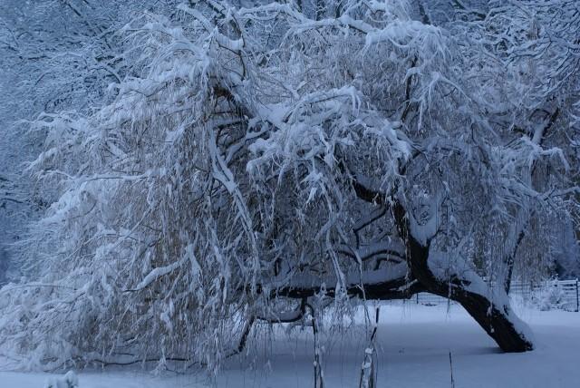 Ambiance et couleurs hivernales, décos naturelles 7_janv11
