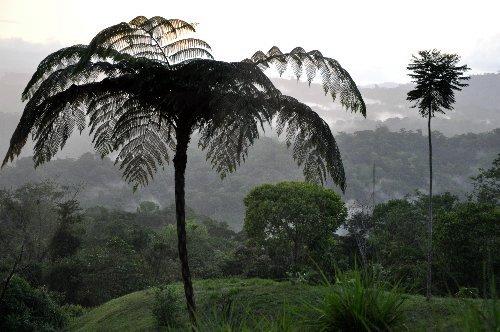 fougères géantes au Costa-Rica Costa_43