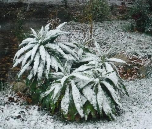 Ambiance et couleurs hivernales, décos naturelles Eichiu10