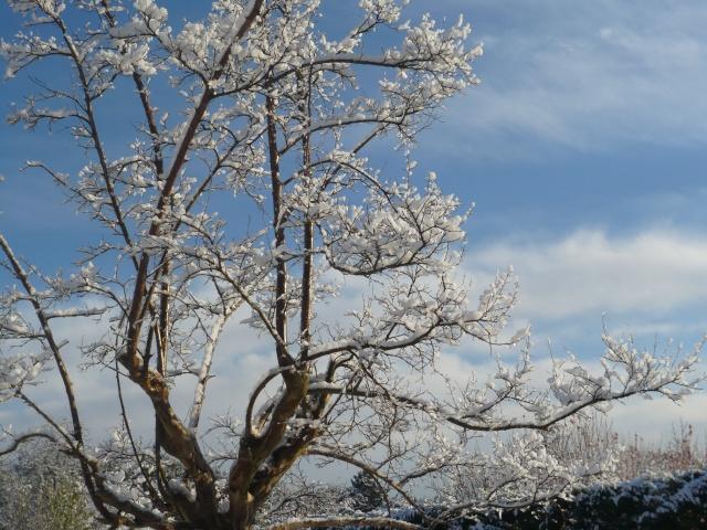 Ambiance et couleurs hivernales, décos naturelles Et_sol10