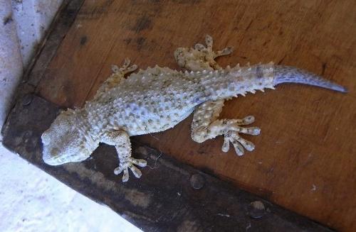 lézards et autres reptiles - Page 5 Fin_ju10