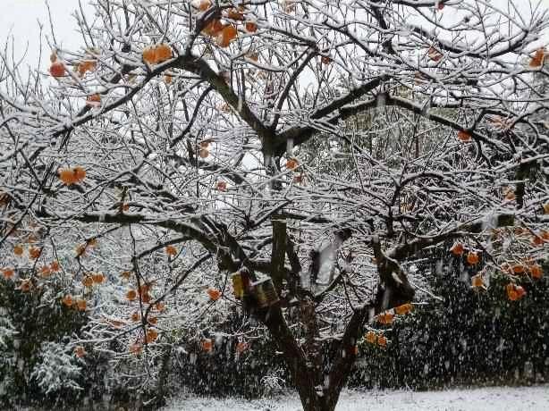 Ambiance et couleurs hivernales, décos naturelles Neige_11