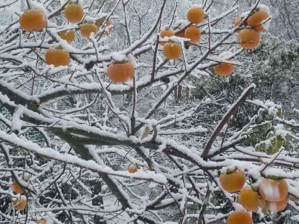 Ambiance et couleurs hivernales, décos naturelles Neige_12