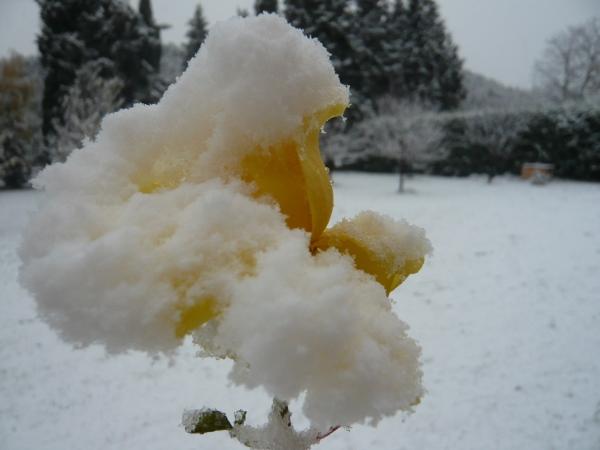 Ambiance et couleurs hivernales, décos naturelles Neige_15