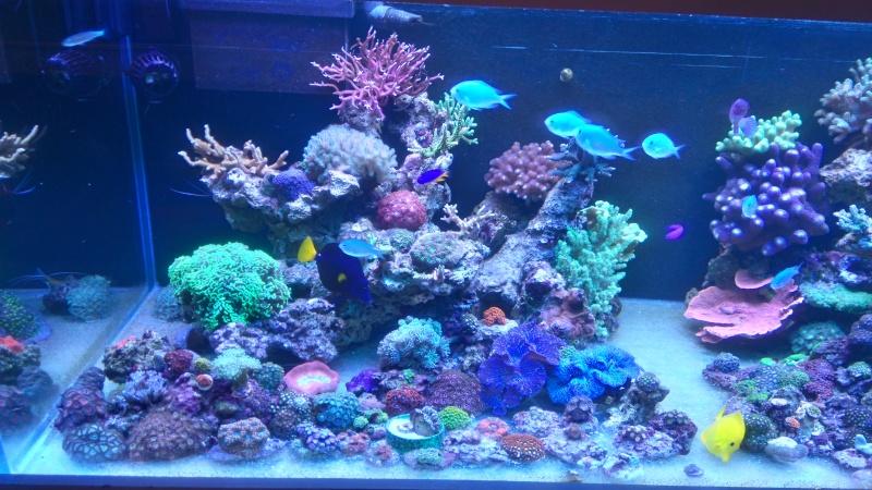 karlito's reef 3  - Page 4 Dsc_0012