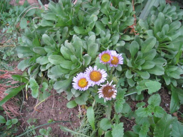 quelques fleurs - Page 3 Photo_15