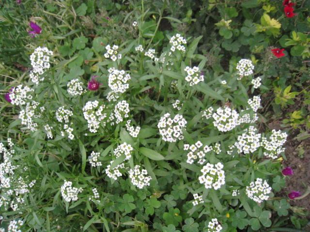quelques fleurs - Page 3 Photo_18