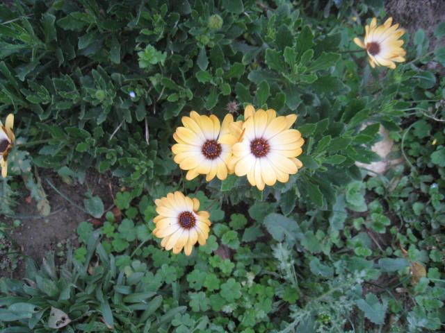 quelques fleurs - Page 3 Photo_20