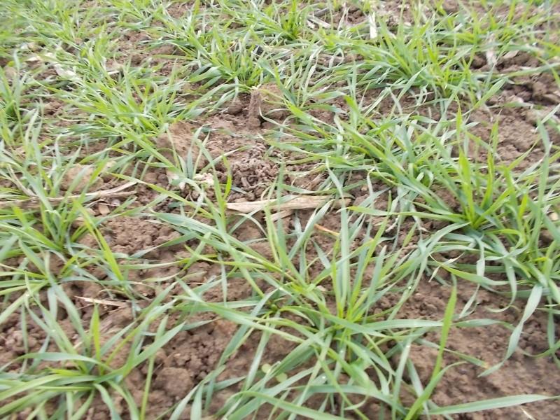 Debut des semis de blé - Page 7 Dscn0212
